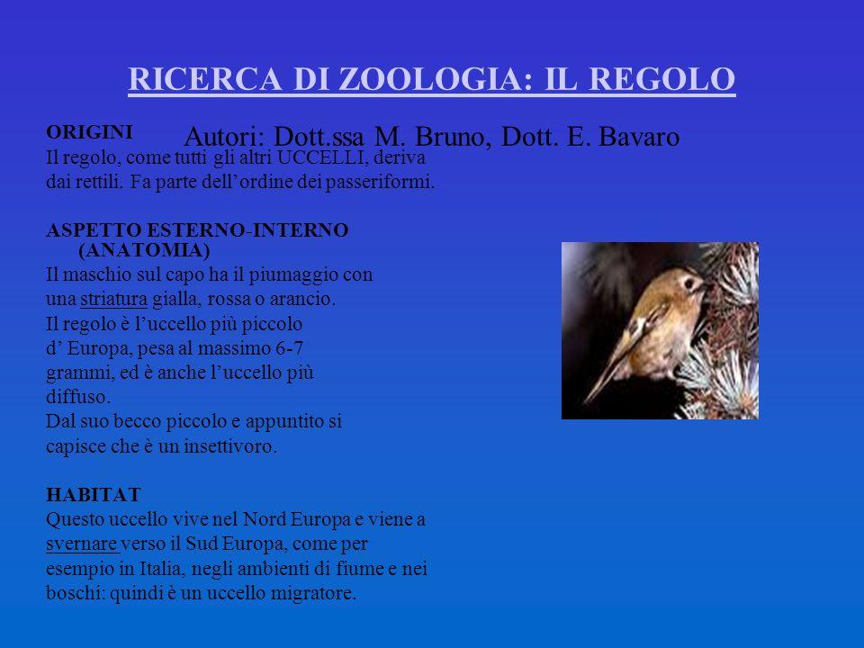 RICERCA DI ZOOLOGIA: IL REGOLO RICERCA DI ZOOLOGIA: IL REGOLO Autori: Dott.ssa M. Bruno, Dott. E. Bavaro ORIGINI Il regolo, come tutti gli altri UCCEL