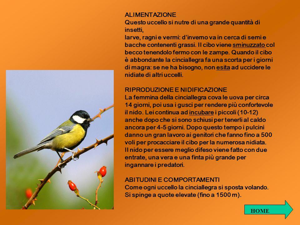 RICERCA DI ZOOLOGIA: IL LUì PICCOLO.Autori: Dott.