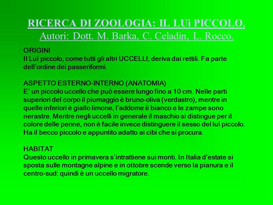 RICERCA DI ZOOLOGIA: IL LUì PICCOLO. Autori: Dott. M. Barka, C. Celadin, L. Rocco. ORIGINI Il Luì piccolo, come tutti gli altri UCCELLI, deriva dai re