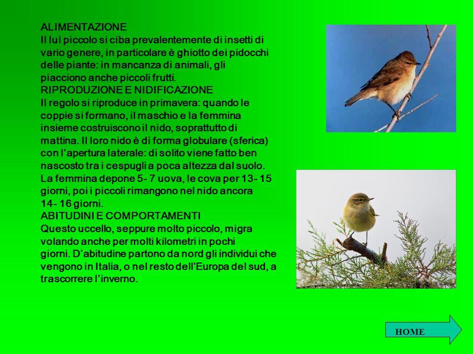 RICERCA DI ZOOLOGIA: IL MERLO Autori: Dott.P. Aimonetto e dott.ssa A.