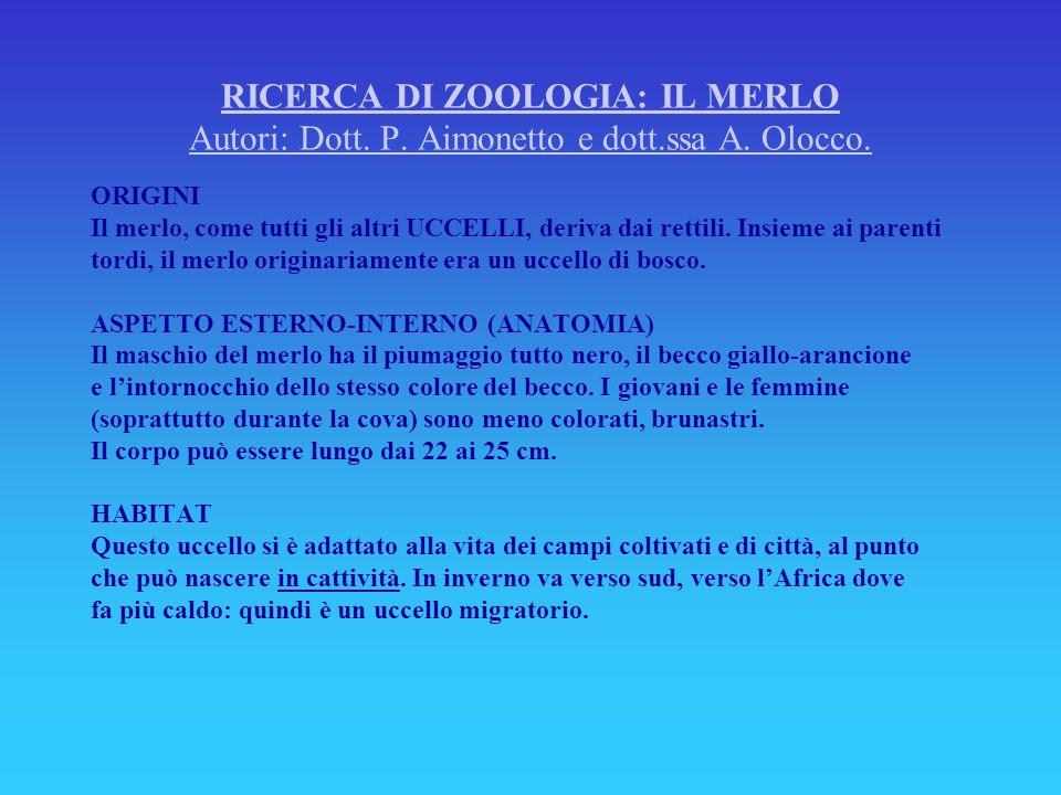 RICERCA DI ZOOLOGIA: IL MERLO Autori: Dott. P. Aimonetto e dott.ssa A. Olocco. ORIGINI Il merlo, come tutti gli altri UCCELLI, deriva dai rettili. Ins