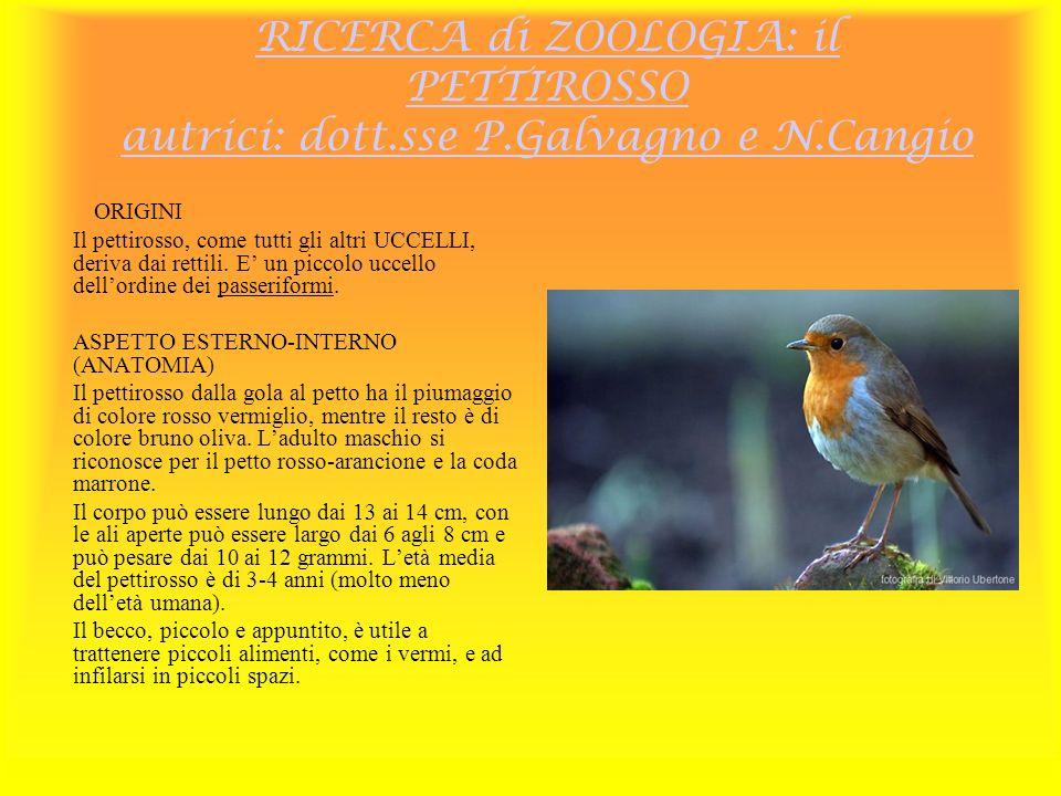 RICERCA di ZOOLOGIA: il PETTIROSSO autrici: dott.sse P.Galvagno e N.Cangio ORIGINI Il pettirosso, come tutti gli altri UCCELLI, deriva dai rettili. E