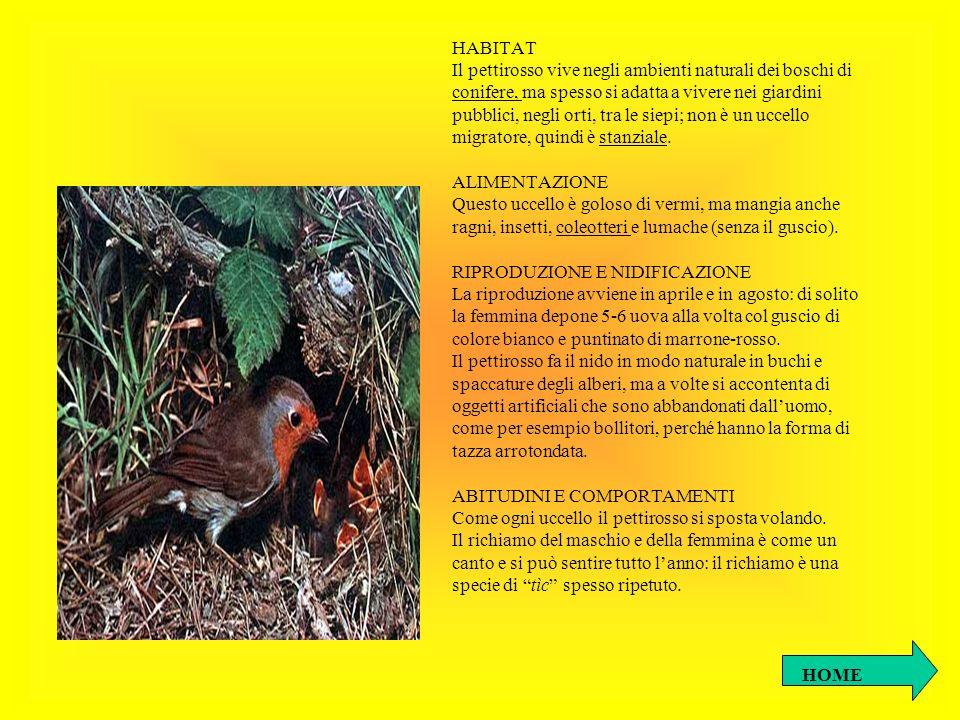 HABITAT Il pettirosso vive negli ambienti naturali dei boschi di conifere, ma spesso si adatta a vivere nei giardini pubblici, negli orti, tra le siep