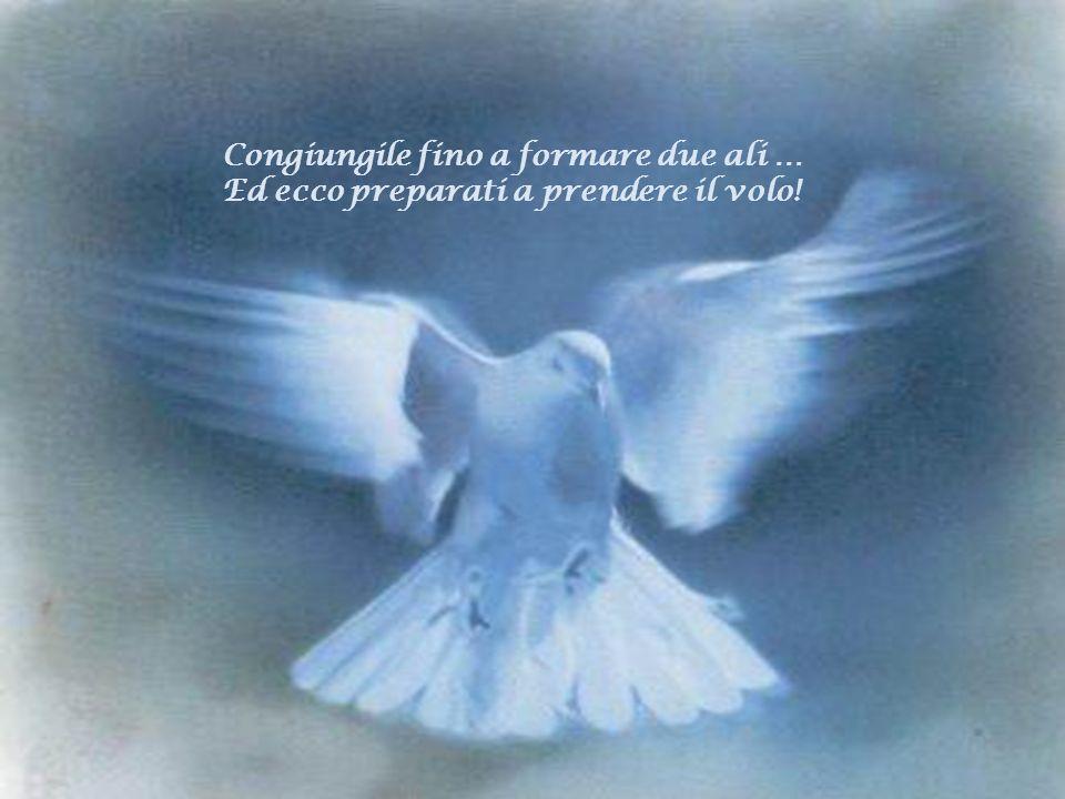 Un angelo allimprovviso ti regala una piuma E ricominci a sperare. E poi unaltra e unaltra ancora …