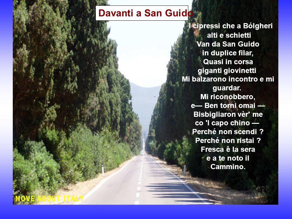 Davanti a San Guido Castagneto Carducci