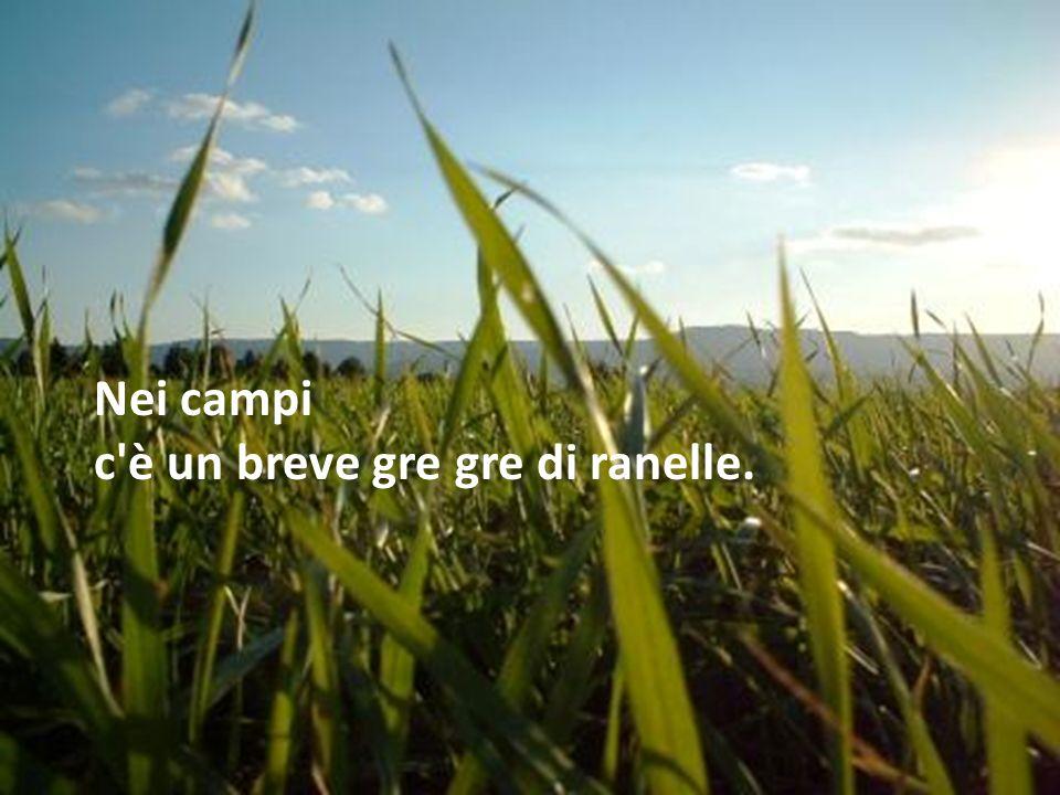 Nei campi c'è un breve gre gre di ranelle.