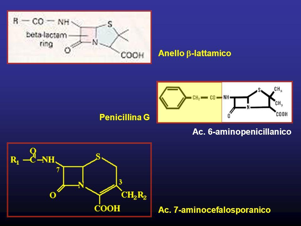 Penicillina G Ac. 6-aminopenicillanico Ac. 7-aminocefalosporanico Anello -lattamico
