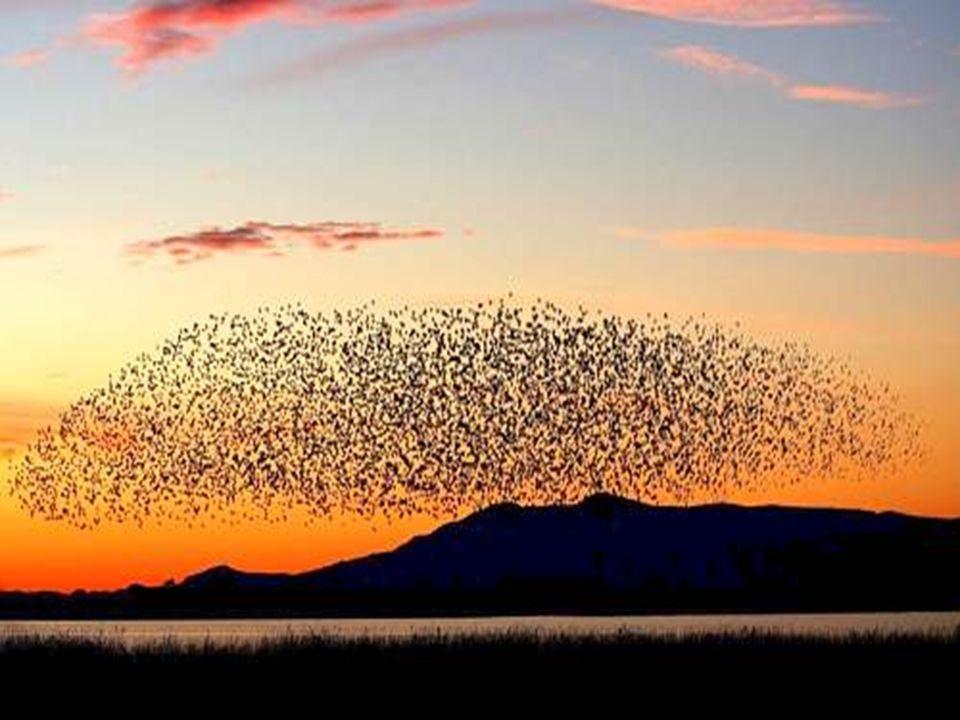 Il prossimo autunno quando vedrete le oche selvatiche puntare verso sud per linverno in formazione di volo a V