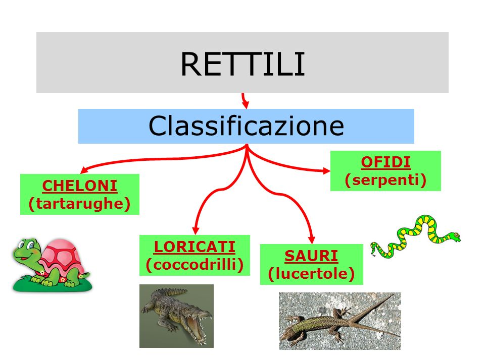 RETTILI Classificazione CHELONI (tartarughe) SAURI (lucertole) LORICATI (coccodrilli) OFIDI (serpenti)