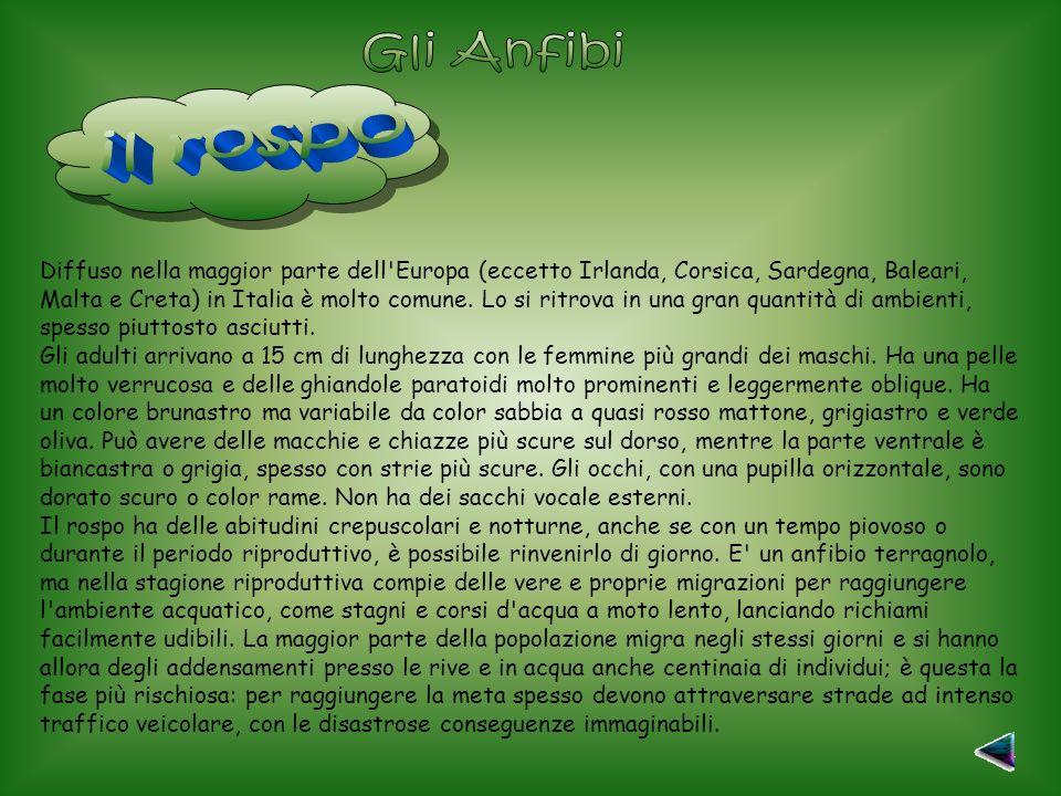 Diffuso nella maggior parte dell Europa (eccetto Irlanda, Corsica, Sardegna, Baleari, Malta e Creta) in Italia è molto comune.