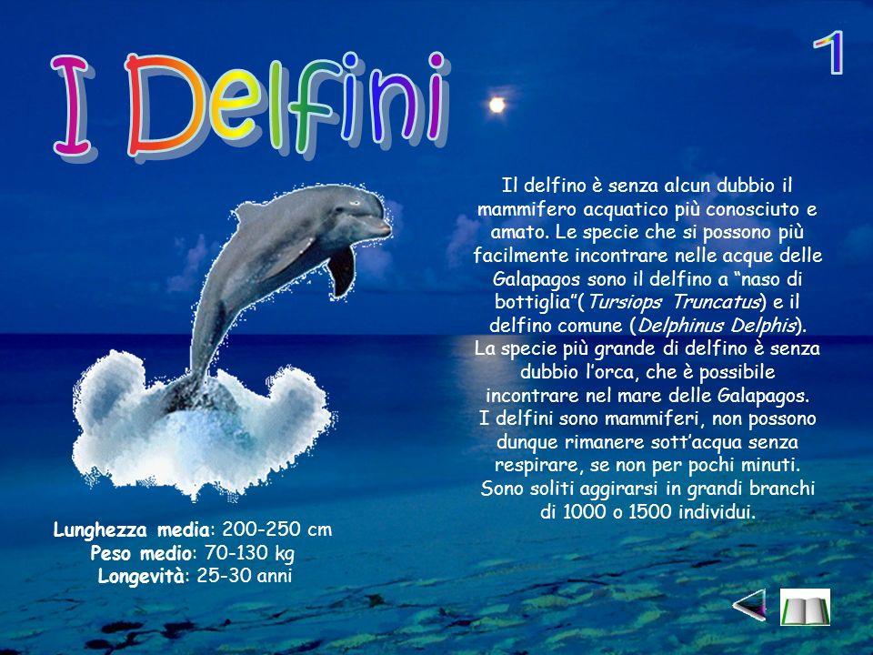 Il delfino è senza alcun dubbio il mammifero acquatico più conosciuto e amato.