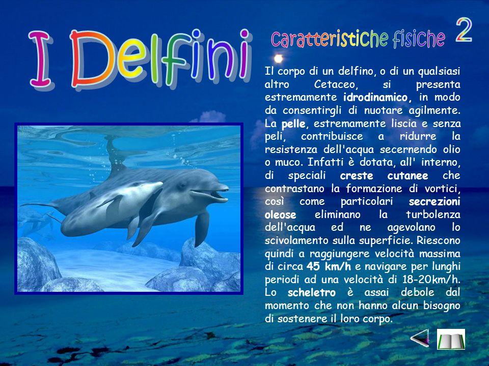 Il corpo di un delfino, o di un qualsiasi altro Cetaceo, si presenta estremamente idrodinamico, in modo da consentirgli di nuotare agilmente.