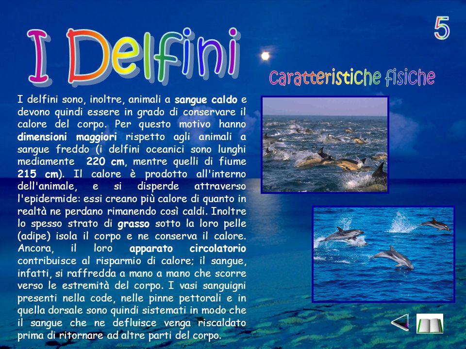 I delfini sono, inoltre, animali a sangue caldo e devono quindi essere in grado di conservare il calore del corpo.