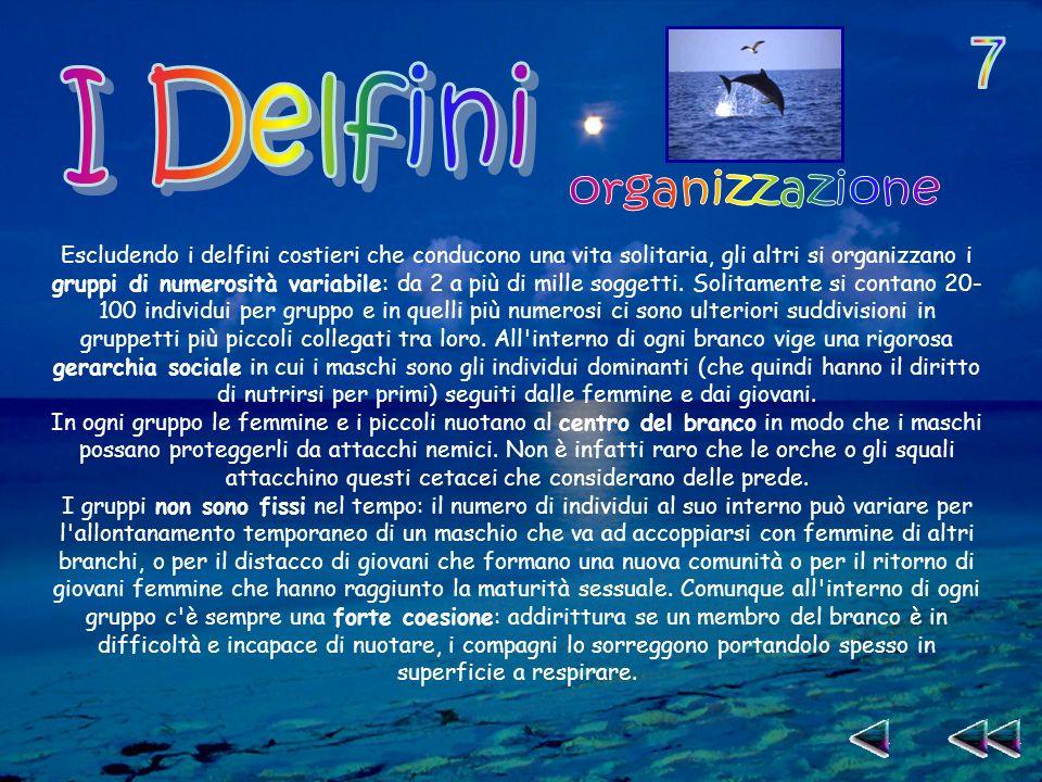 Escludendo i delfini costieri che conducono una vita solitaria, gli altri si organizzano i gruppi di numerosità variabile: da 2 a più di mille soggetti.