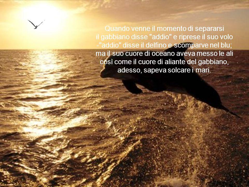 Quando venne il momento di separarsi il gabbiano disse addio e riprese il suo volo - addio disse il delfino e scomparve nel blu; ma il suo cuore di oceano aveva messo le ali così come il cuore di aliante del gabbiano, adesso, sapeva solcare i mari.