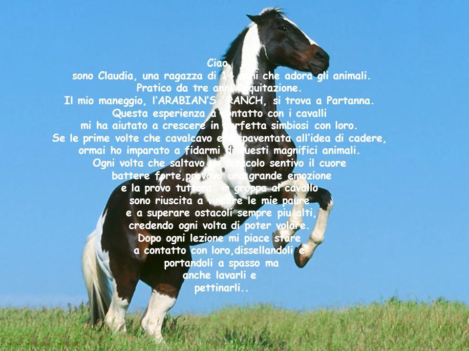 Ciao, sono Claudia, una ragazza di 14 anni che adora gli animali. Pratico da tre anni lequitazione. Il mio maneggio, lARABIANS RANCH, si trova a Parta