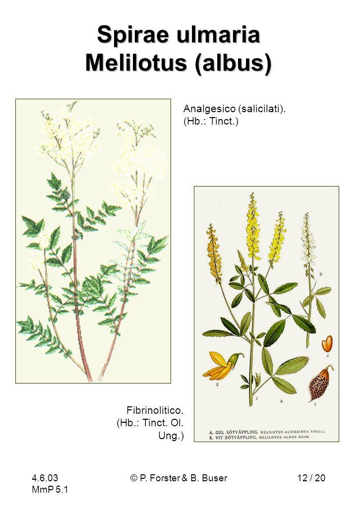 4.6.03 MmP 5.1 © P. Forster & B. Buser12 / 20 Spirae ulmaria Melilotus (albus) Fibrinolitico. (Hb.: Tinct. Ol. Ung.) Analgesico (salicilati). (Hb.: Ti