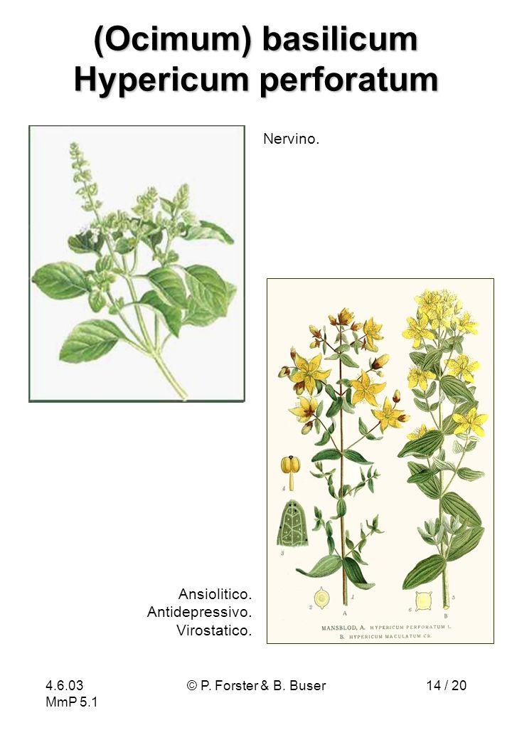 4.6.03 MmP 5.1 © P. Forster & B. Buser14 / 20 (Ocimum) basilicum Hypericum perforatum Ansiolitico. Antidepressivo. Virostatico. Nervino.