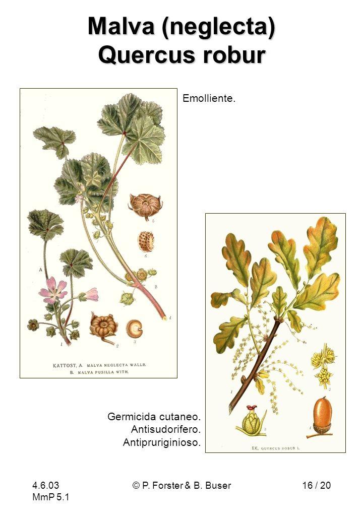 4.6.03 MmP 5.1 © P. Forster & B. Buser16 / 20 Malva (neglecta) Quercus robur Germicida cutaneo. Antisudorifero. Antipruriginioso. Emolliente.