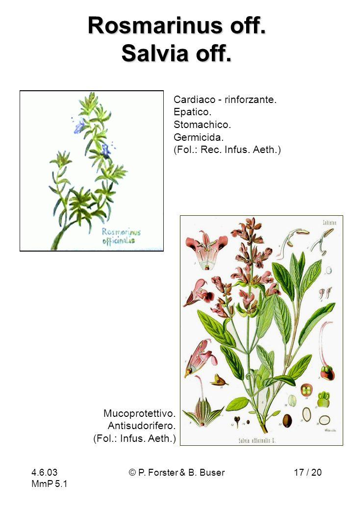 4.6.03 MmP 5.1 © P. Forster & B. Buser17 / 20 Rosmarinus off. Salvia off. Cardiaco - rinforzante. Epatico. Stomachico. Germicida. (Fol.: Rec. Infus. A