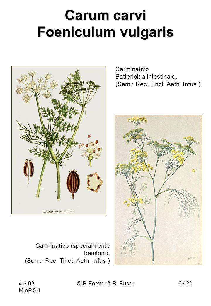 4.6.03 MmP 5.1 © P. Forster & B. Buser6 / 20 Carum carvi Foeniculum vulgaris Carminativo. Battericida intestinale. (Sem.: Rec. Tinct. Aeth. Infus.) Ca