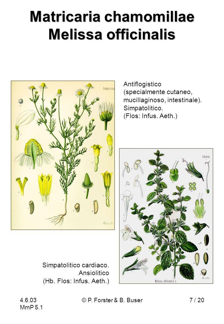 4.6.03 MmP 5.1 © P. Forster & B. Buser7 / 20 Matricaria chamomillae Melissa officinalis Antiflogistico (specialmente cutaneo, mucillaginoso, intestina