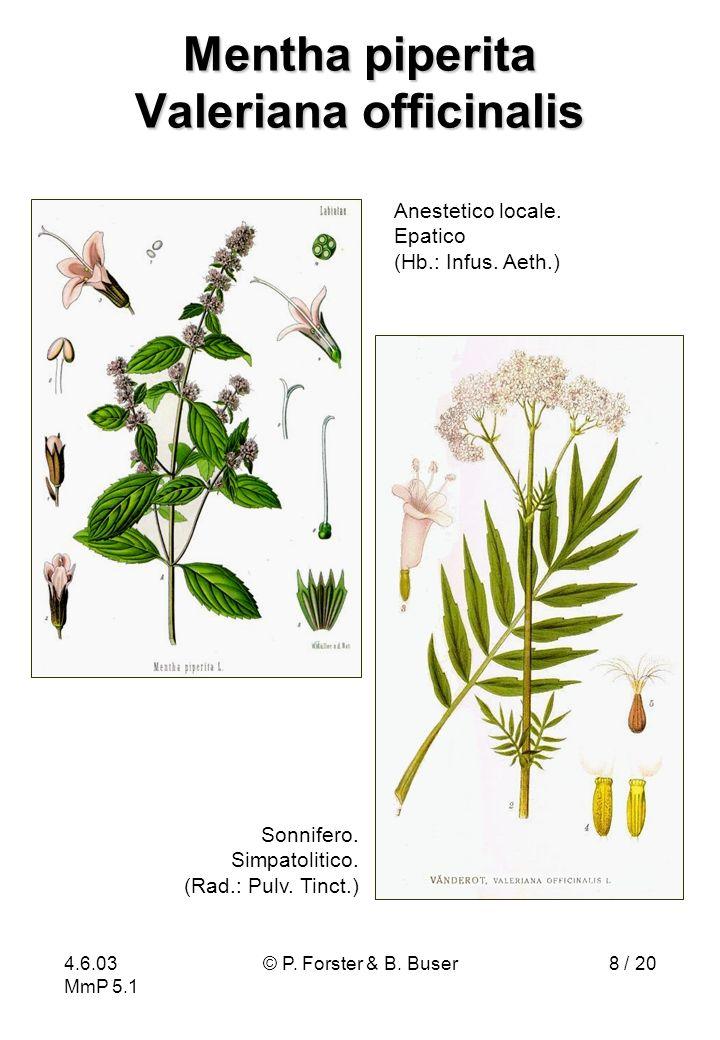 4.6.03 MmP 5.1 © P. Forster & B. Buser8 / 20 Mentha piperita Valeriana officinalis Anestetico locale. Epatico (Hb.: Infus. Aeth.) Sonnifero. Simpatoli