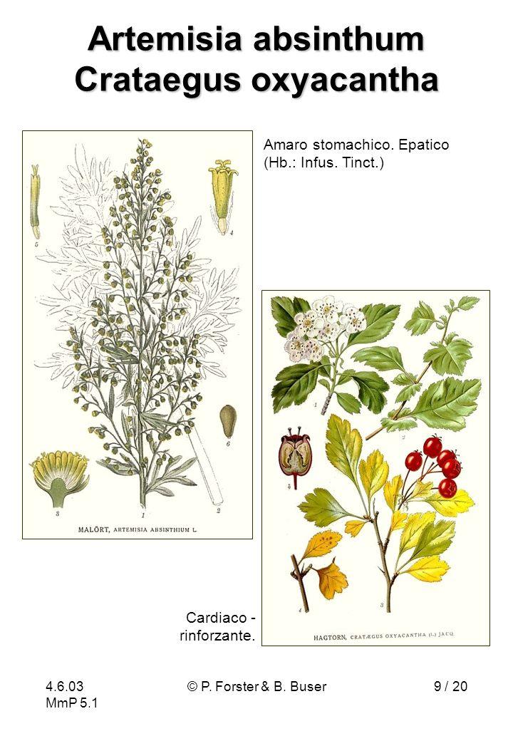 4.6.03 MmP 5.1 © P. Forster & B. Buser9 / 20 Artemisia absinthum Crataegus oxyacantha Cardiaco - rinforzante. Amaro stomachico. Epatico (Hb.: Infus. T