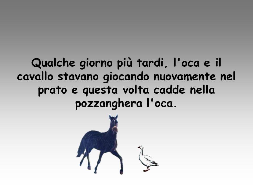 Loca chiese aiuto al suo compagno di gioco dicendogli di andare a chiamare il contadino… Al che il cavallo disse: non cè ne bisogno, ci penso io! .