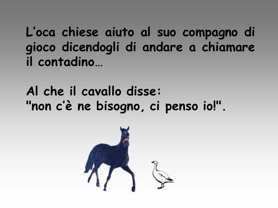 Loca chiese aiuto al suo compagno di gioco dicendogli di andare a chiamare il contadino… Al che il cavallo disse: