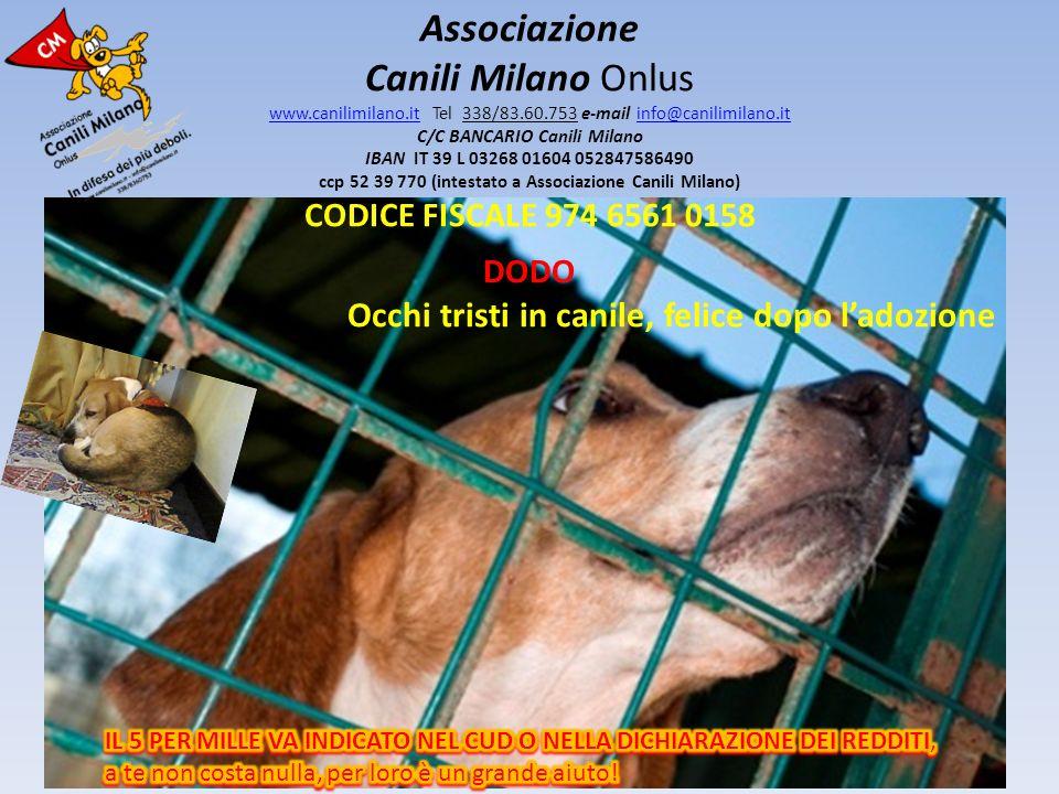 Associazione Canili Milano Onlus www.canilimilano.it Tel 338/83.60.753 e-mail info@canilimilano.it C/C BANCARIO Canili Milano IBAN IT 39 L 03268 01604 052847586490 ccp 52 39 770 (intestato a Associazione Canili Milano) CODICE FISCALE 974 6561 0158 www.canilimilano.itinfo@canilimilano.it ARMAGNAC Occhi tristi in canile, felice dopo ladozione