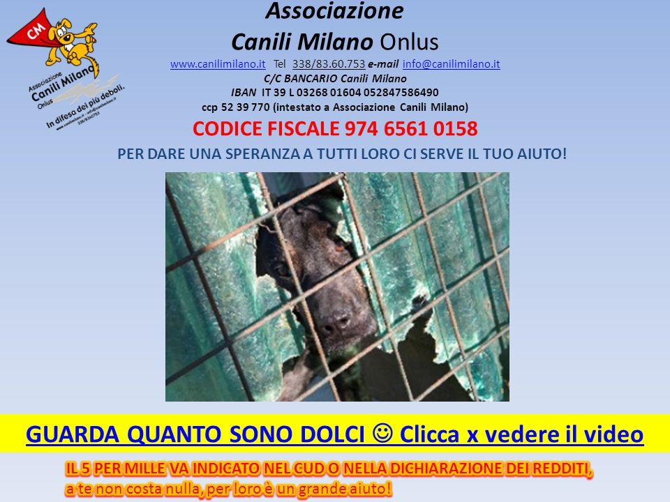 PER DARE UNA SPERANZA A TUTTI LORO CI SERVE IL TUO AIUTO! Associazione Canili Milano Onlus www.canilimilano.it Tel 338/83.60.753 e-mail info@canilimil
