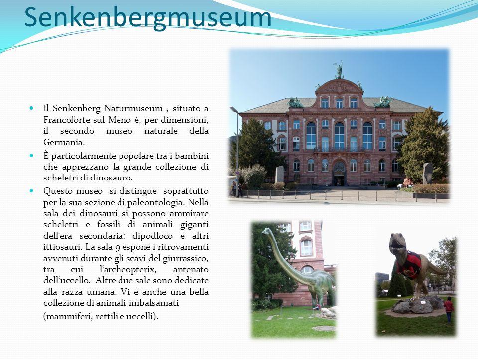 Senkenbergmuseum Il Senkenberg Naturmuseum, situato a Francoforte sul Meno è, per dimensioni, il secondo museo naturale della Germania. È particolarme