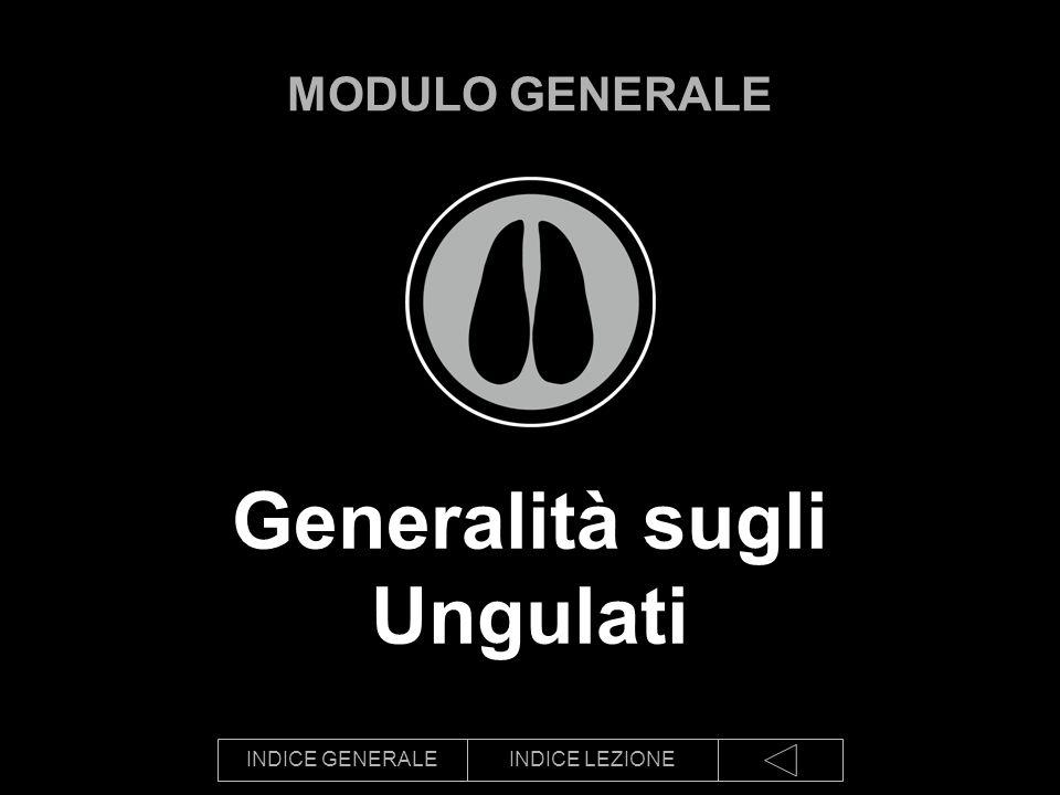 INDICE GENERALEINDICE LEZIONE Generalità sugli Ungulati MODULO GENERALE