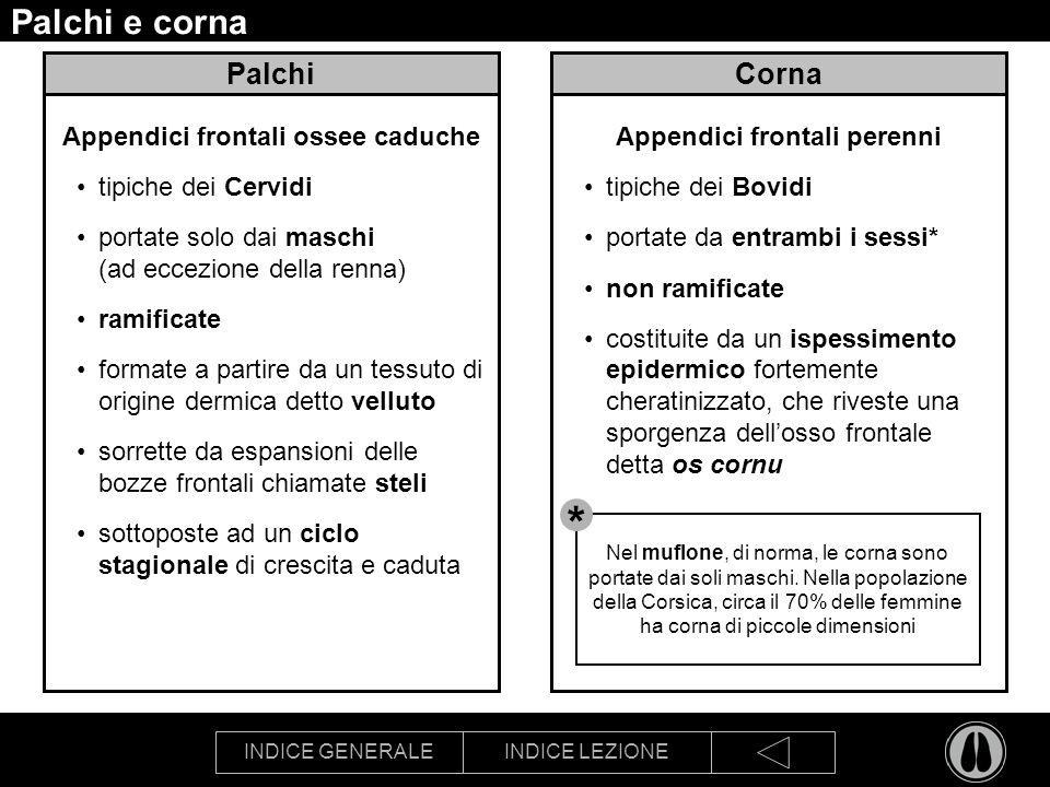 INDICE GENERALEINDICE LEZIONE Palchi e corna Palchi Appendici frontali ossee caduche tipiche dei Cervidi portate solo dai maschi (ad eccezione della r