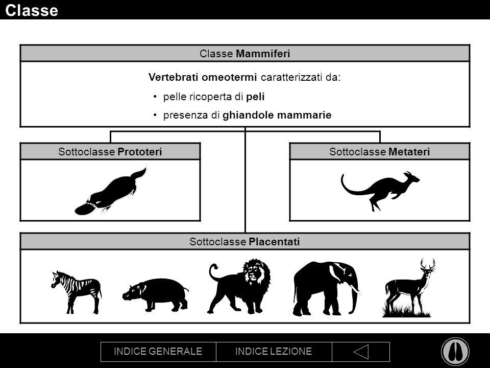 INDICE GENERALEINDICE LEZIONE Classe Sottoclasse Prototeri Sottoclasse Metateri Sottoclasse Placentati Classe Mammiferi Vertebrati omeotermi caratteri