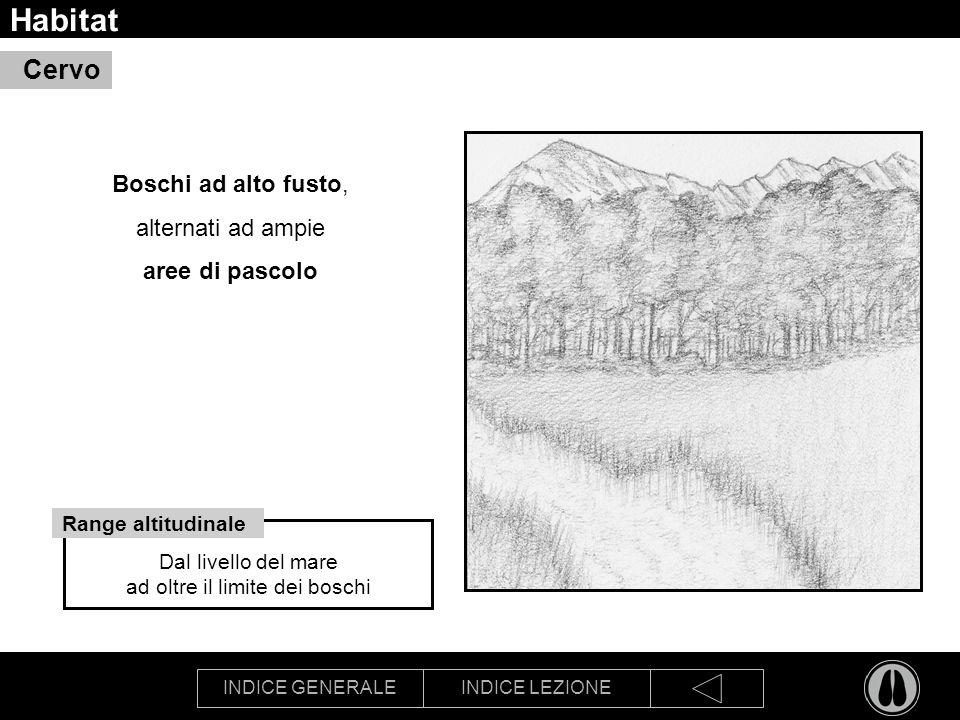INDICE GENERALEINDICE LEZIONE Habitat Boschi ad alto fusto, alternati ad ampie aree di pascolo Cervo Dal livello del mare ad oltre il limite dei boschi Range altitudinale