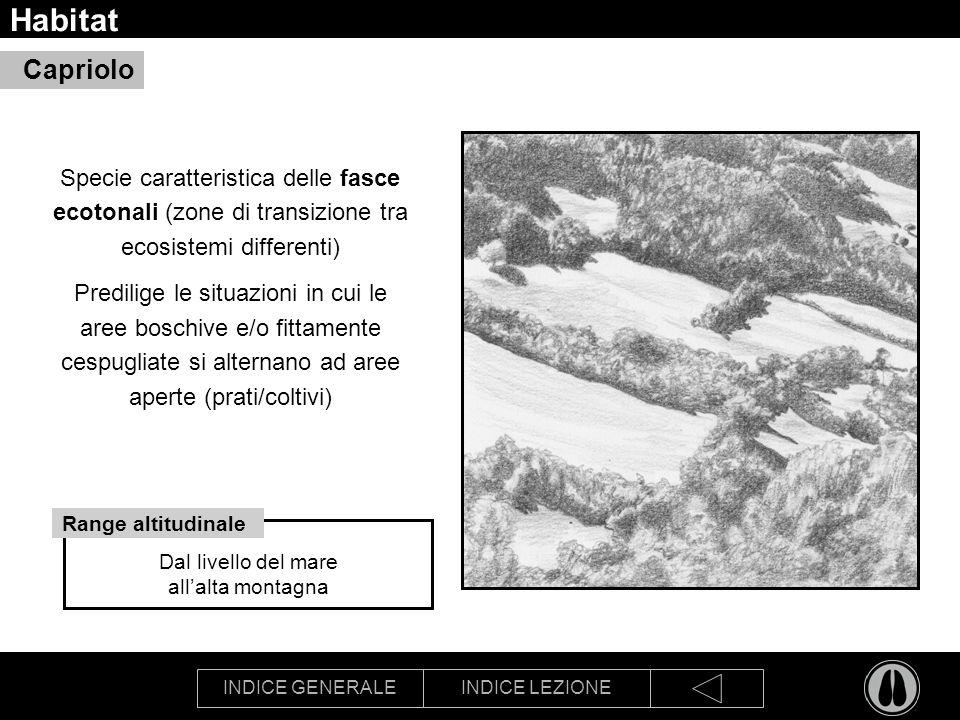 INDICE GENERALEINDICE LEZIONE Habitat Specie caratteristica delle fasce ecotonali (zone di transizione tra ecosistemi differenti) Predilige le situazi