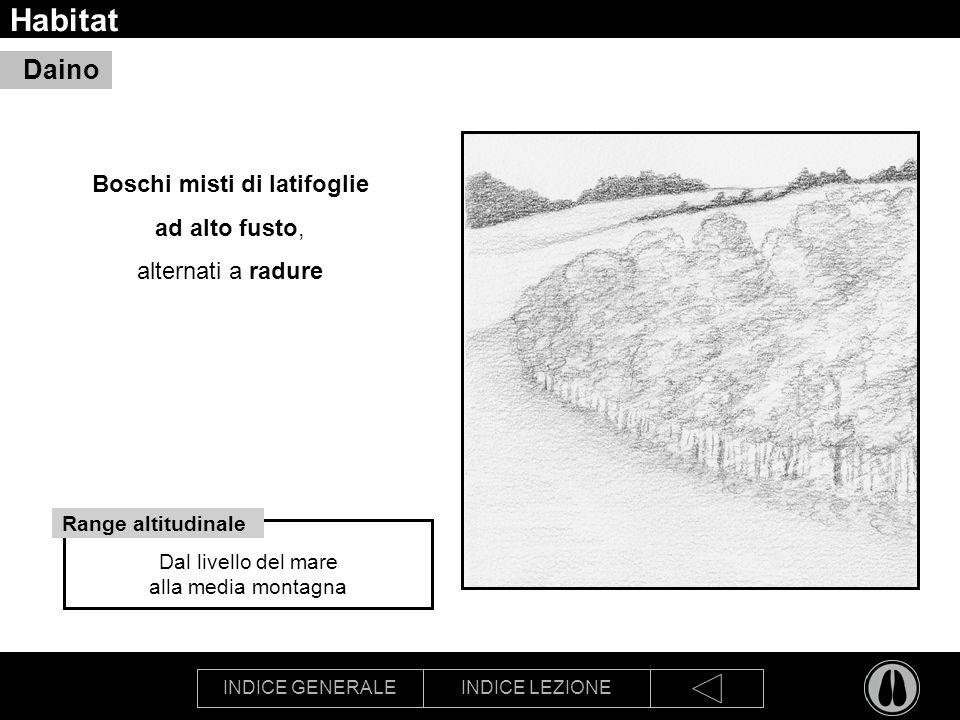 INDICE GENERALEINDICE LEZIONE Habitat Boschi misti di latifoglie ad alto fusto, alternati a radure Daino Dal livello del mare alla media montagna Range altitudinale