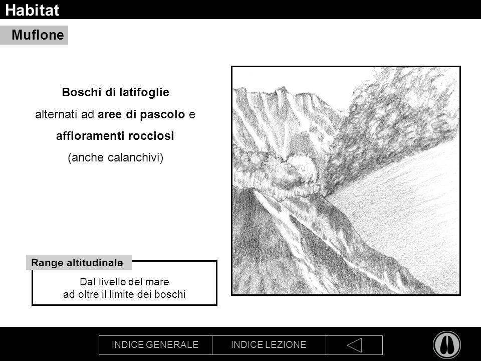INDICE GENERALEINDICE LEZIONE Habitat Boschi di latifoglie alternati ad aree di pascolo e affioramenti rocciosi (anche calanchivi) Muflone Dal livello del mare ad oltre il limite dei boschi Range altitudinale