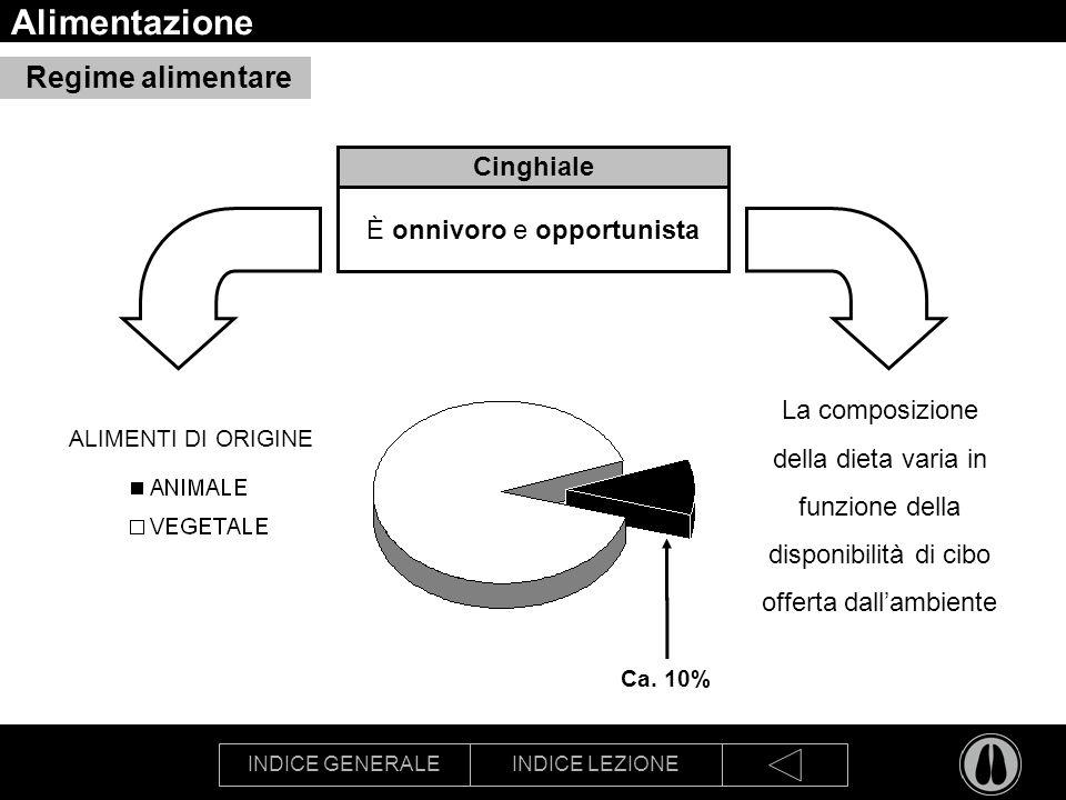 INDICE GENERALEINDICE LEZIONE Alimentazione Cinghiale È onnivoro e opportunista La composizione della dieta varia in funzione della disponibilità di c