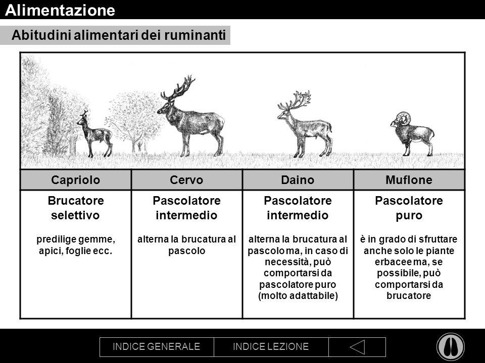 INDICE GENERALEINDICE LEZIONE Alimentazione Abitudini alimentari dei ruminanti CaprioloCervoDainoMuflone Brucatore selettivo predilige gemme, apici, f