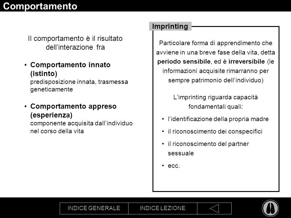 INDICE GENERALEINDICE LEZIONE Comportamento Il comportamento è il risultato dellinterazione fra Comportamento innato (istinto) predisposizione innata,