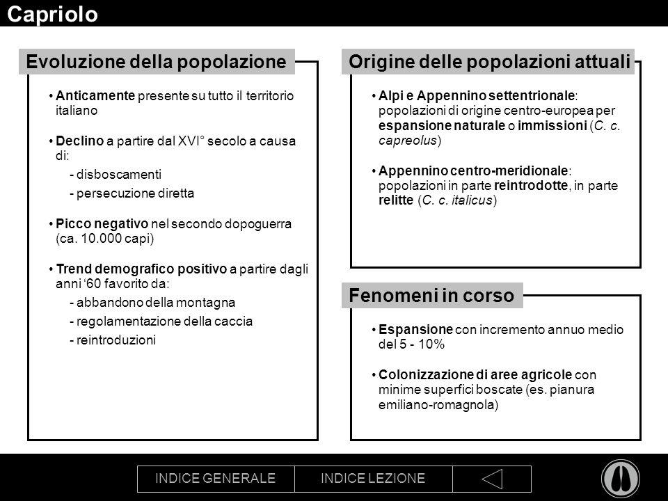 INDICE GENERALEINDICE LEZIONE Capriolo Anticamente presente su tutto il territorio italiano Declino a partire dal XVI° secolo a causa di: -disboscamenti -persecuzione diretta Picco negativo nel secondo dopoguerra (ca.