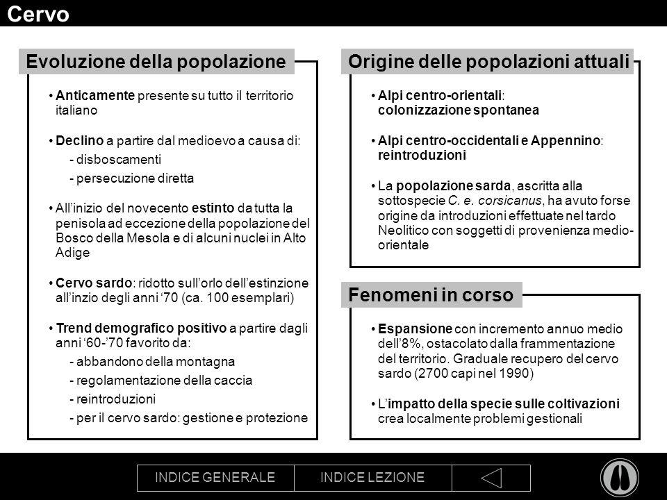 INDICE GENERALEINDICE LEZIONE Cervo Anticamente presente su tutto il territorio italiano Declino a partire dal medioevo a causa di: -disboscamenti -pe