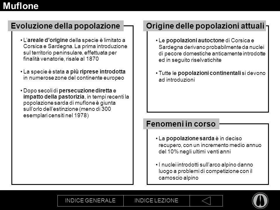 INDICE GENERALEINDICE LEZIONE Muflone Lareale dorigine della specie è limitato a Corsica e Sardegna. La prima introduzione sul territorio peninsulare,