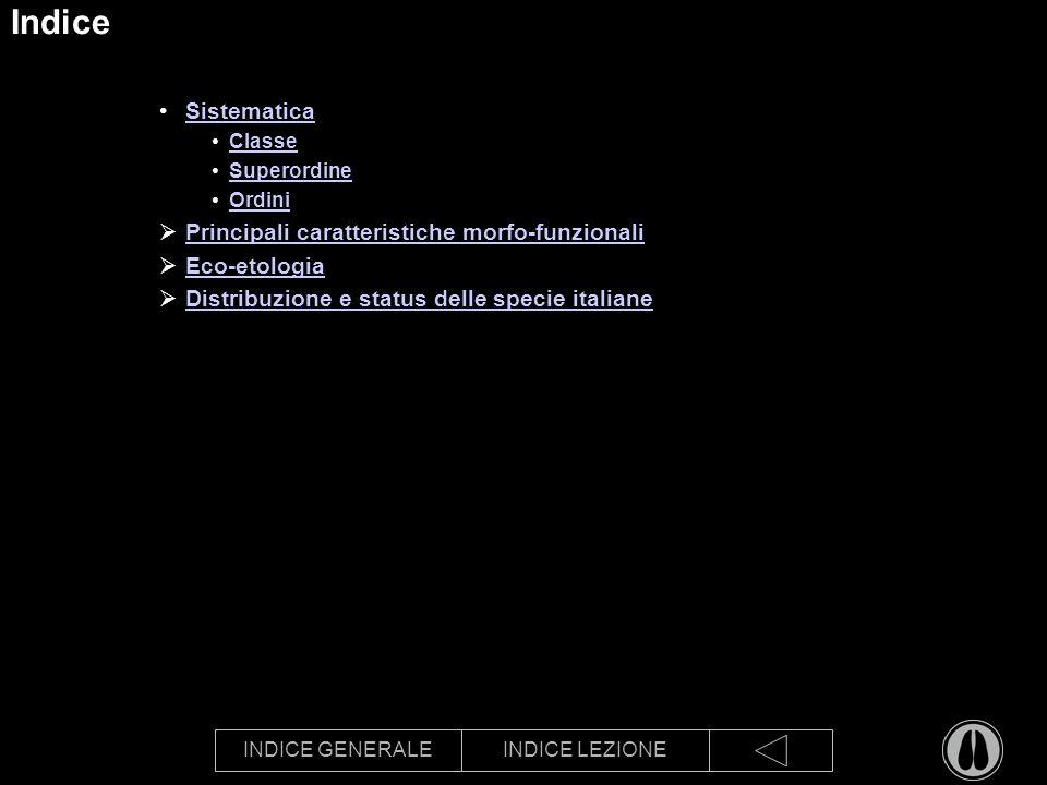 INDICE GENERALEINDICE LEZIONE Indice Sistematica Classe Superordine Ordini Principali caratteristiche morfo-funzionali Eco-etologia Distribuzione e status delle specie italiane