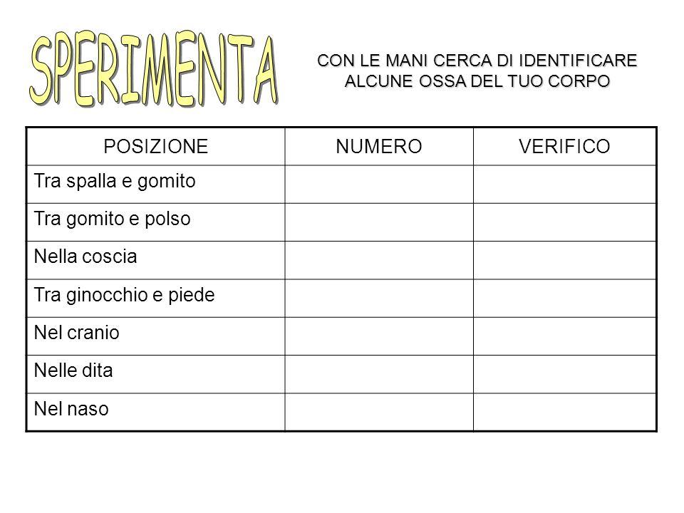 PROTEGGE SOSTIENE PERMETTE IL MOVIMENTO PRODUCE LE CELLULE DEL SANGUE