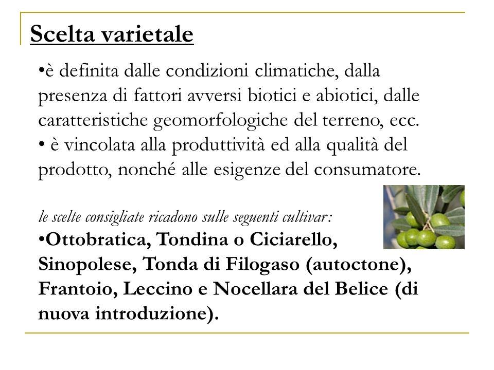 Scelta varietale è definita dalle condizioni climatiche, dalla presenza di fattori avversi biotici e abiotici, dalle caratteristiche geomorfologiche d