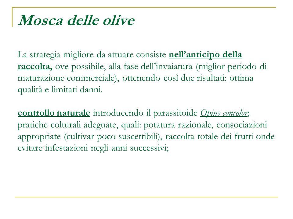 Mosca delle olive La strategia migliore da attuare consiste nellanticipo della raccolta, ove possibile, alla fase dellinvaiatura (miglior periodo di m